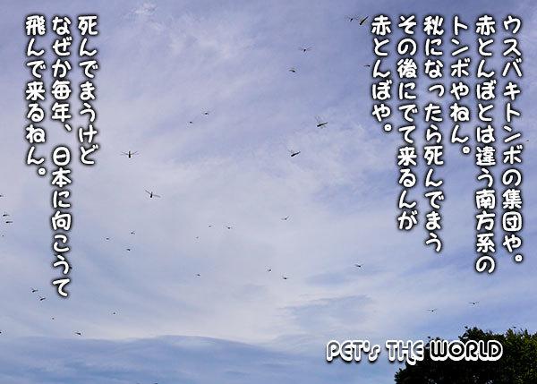 2020-09-02-05.jpg