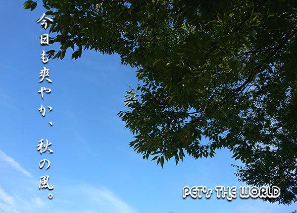 2020-09-28-01.jpg