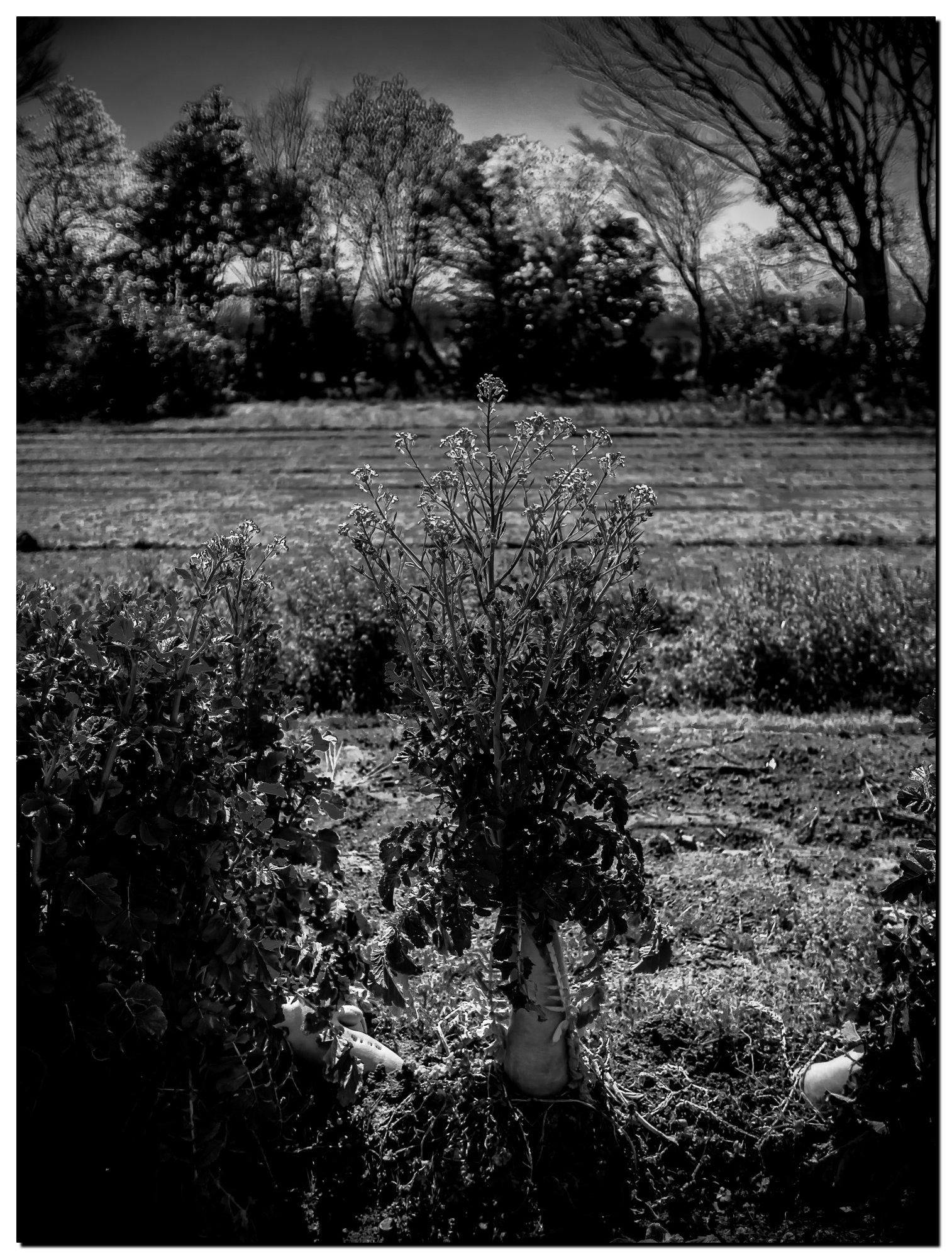 01LR-PF191876-Edit-2.jpg