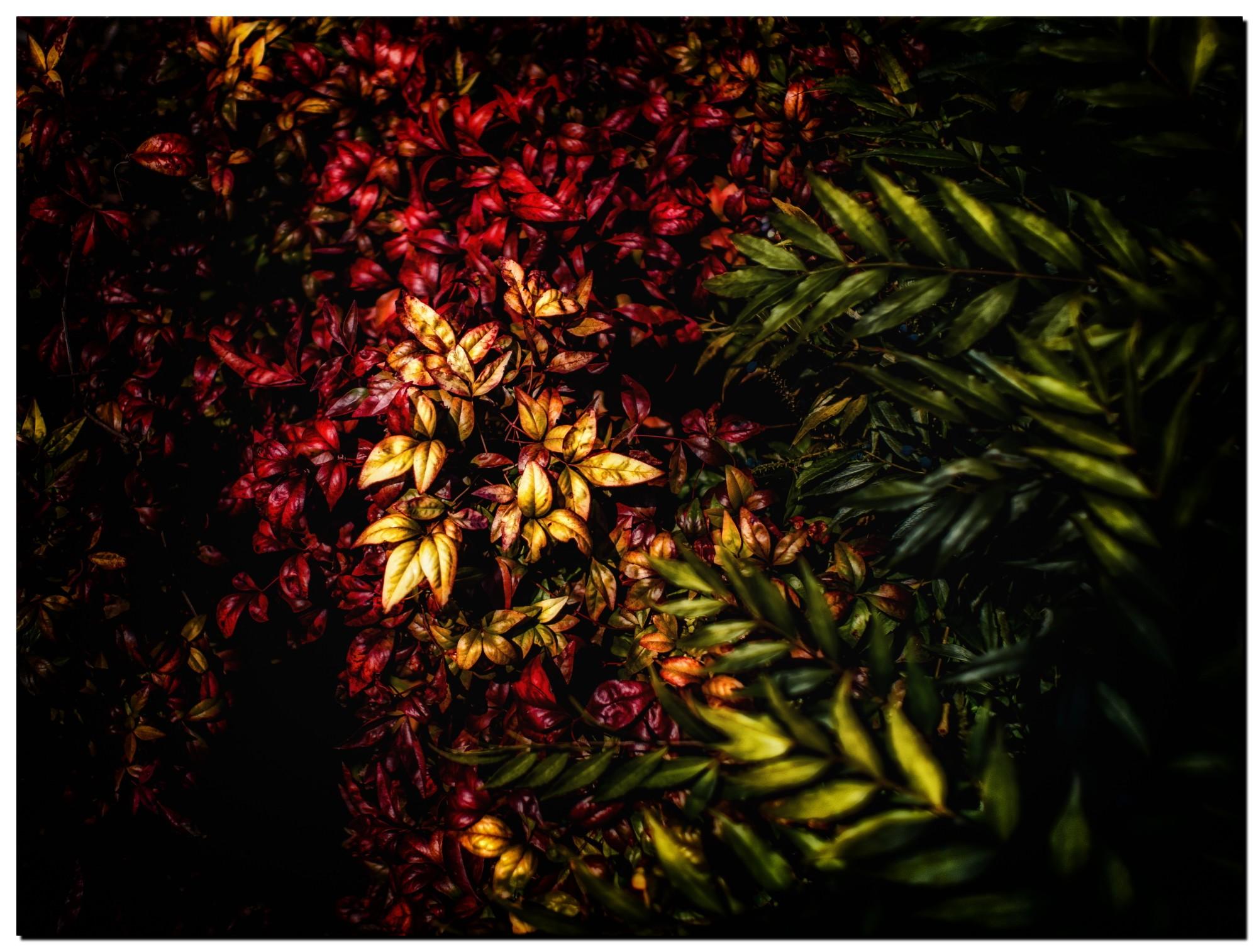 01LR-PF191968-Edit-2.jpg