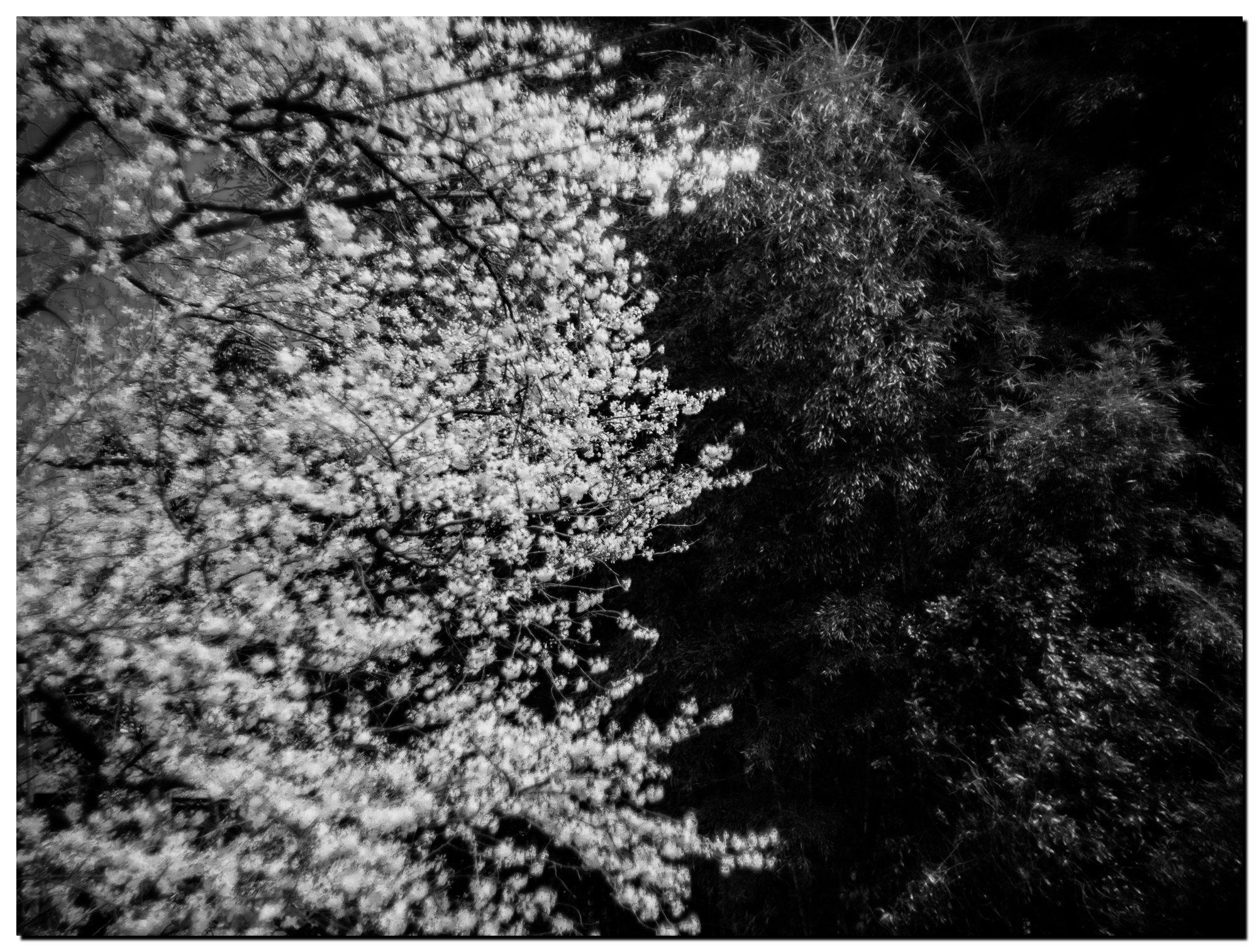 02LR-PF032594-Edit-2.jpg