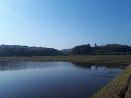 【写真】農園隣りの田んぼの水面に映った三舟山