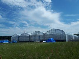 【写真】青空の下に建つ完成したばかりのブルハウス(4連棟)