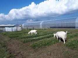【写真】青い空と白い雲とシロツメクサ畑とアランとポール