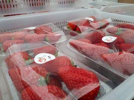 【写真】味楽囲の店頭に並ぶ予定のポレポレいちごのパック