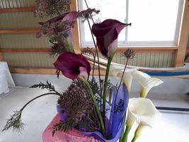 【写真】再建祝いにいただいた赤紫のカラーの花