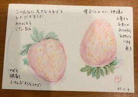 【写真】ポレポレ苺を描いた絵葉書