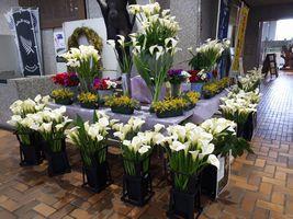 【写真】君津市役所のロビーに飾られたカラーの花