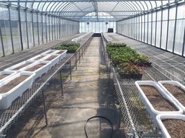 【写真】来シーズンの親苗を植えるプランターが並んだ育苗ハウスの様子