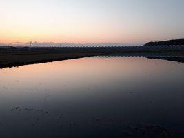 【写真】農園前の田んぼの水面に朝焼けが映っている様子
