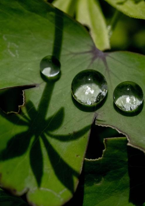 水玉と影 (1 - 1)