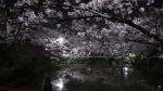2021夜桜 偕楽公園
