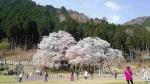 2021淡墨桜