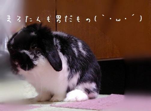 chibimaro20200502-03.jpg