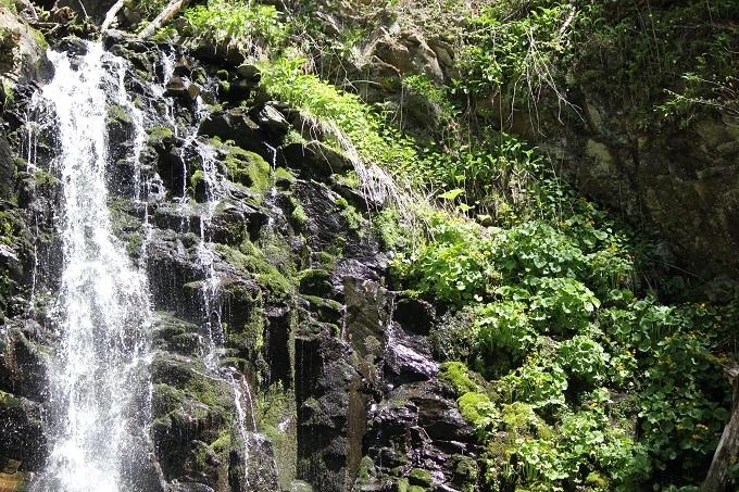 虹の滝とヤチブキ (2)