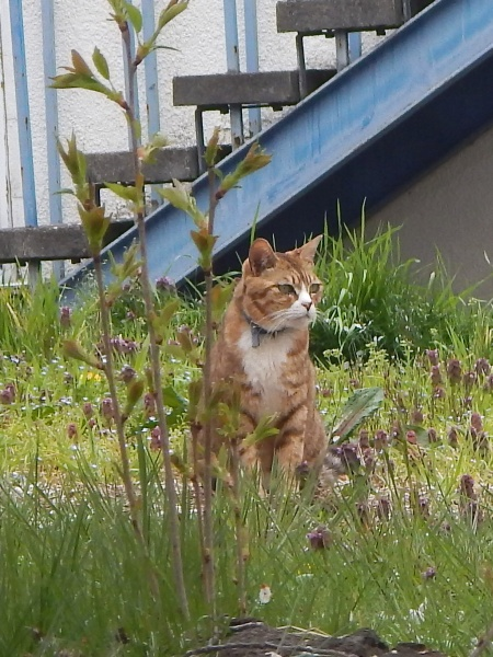 jouyama cat