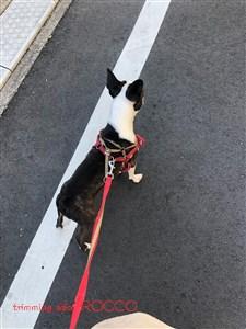 花子20200320散歩