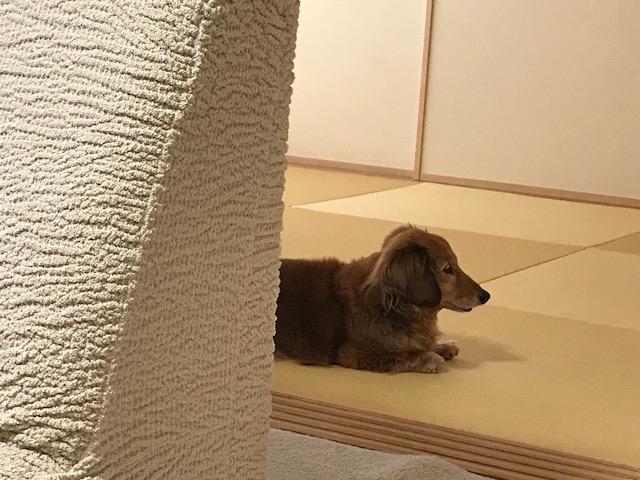nanishiteru.png