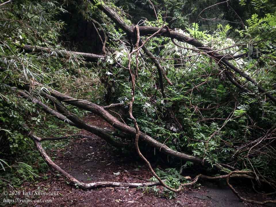 畑トンネル(心霊スポット) 南側の山道を塞ぐ倒木