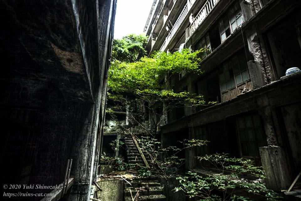 軍艦島 鉱員社宅「日給社宅」 17号棟と18号棟の間にはしっかりとした樹木が生えている