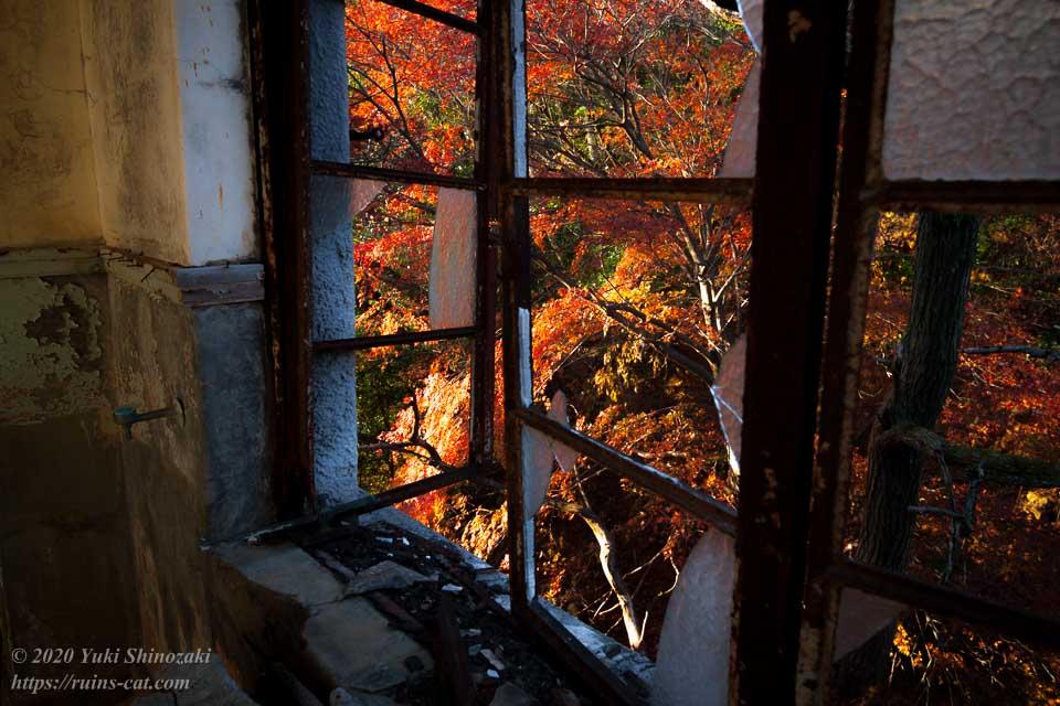 4階厨房の窓から見える紅葉