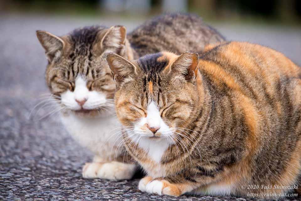 仲良く耳の先端がカットされた猫の兄弟