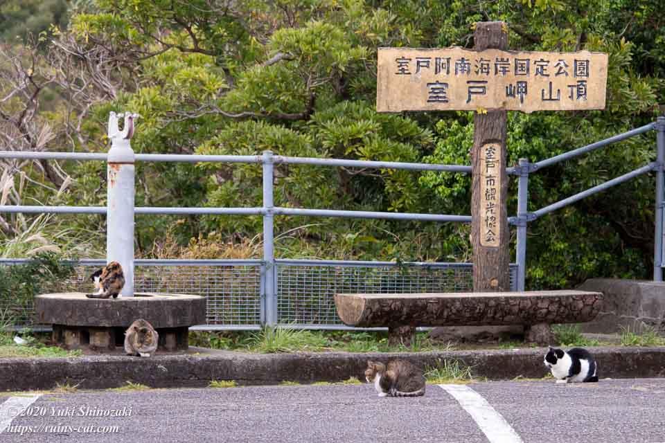 のびのびと過ごす室戸岬の猫たち