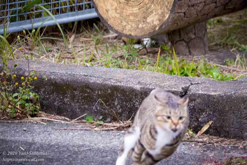 疾走する猫