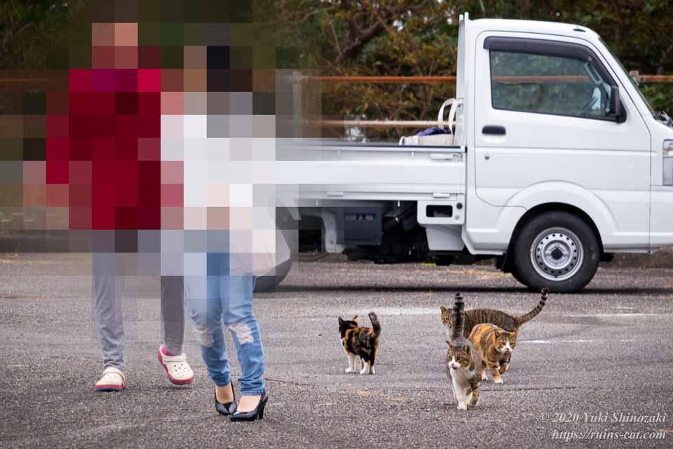 車から降りてきたカップルに集る猫