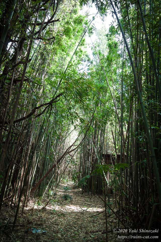 ホテル江戸城の左回りのルートを進んだところ。周囲は一面緑の竹林に囲まれており、右奥に最初の建物が見えてきた。