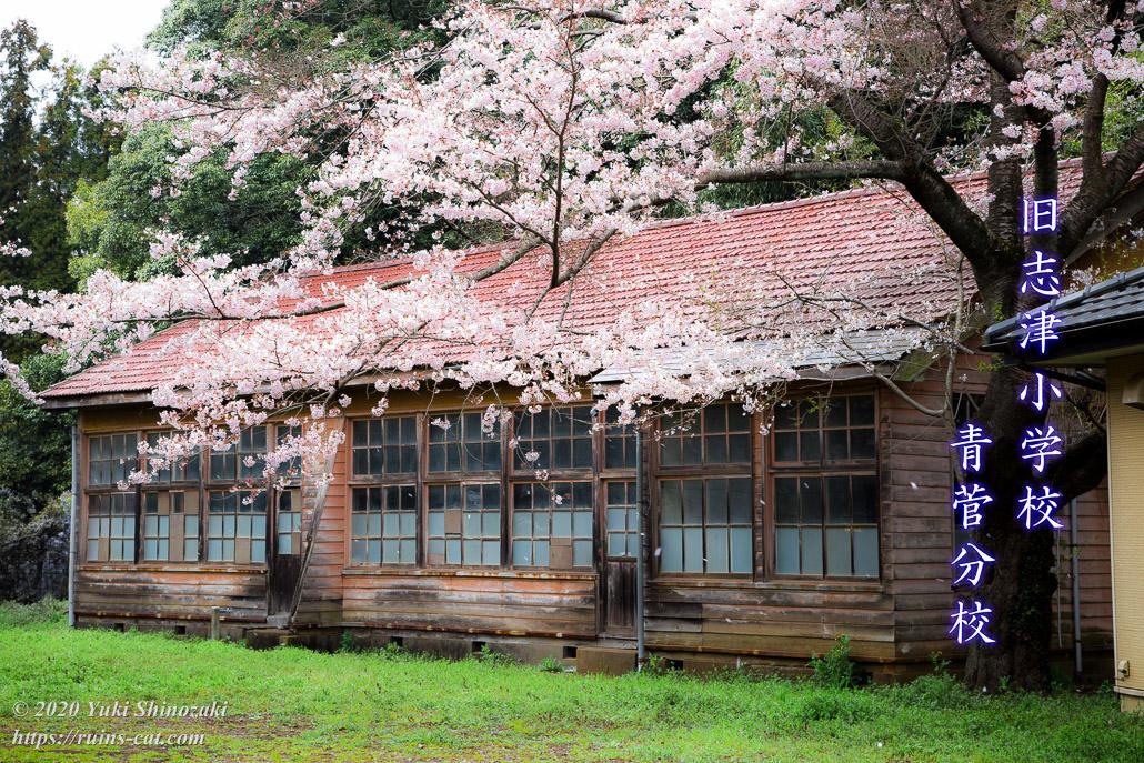 旧志津小学校青菅分校 ~廃校の桜~