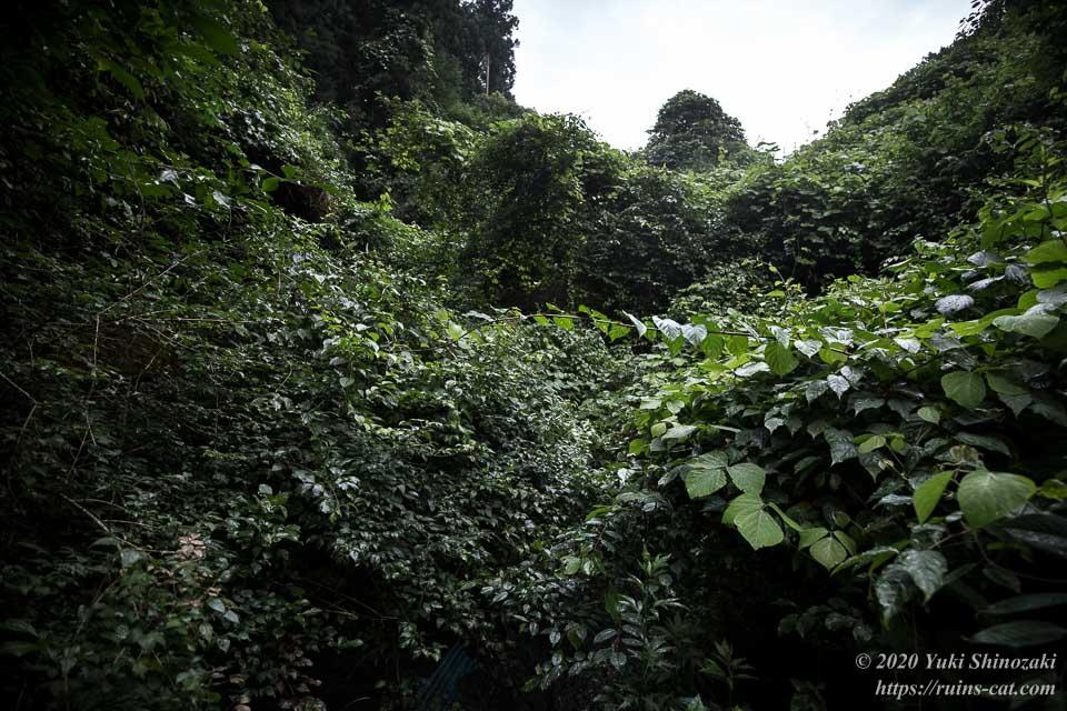 矢板トンネル(弥五郎坂トンネル)前に立ちふさがる厚い草の壁