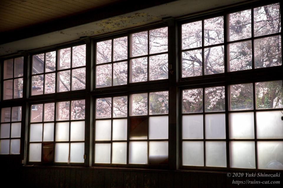 教室の窓からは外の桜が見える