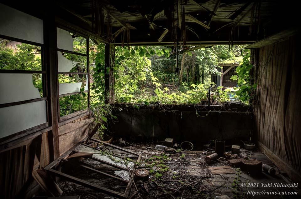 蔦の絡まる病棟の一室