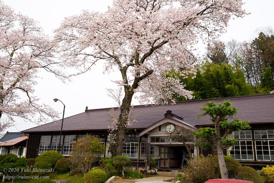 満開の桜の下の旧上岡小学校 その2