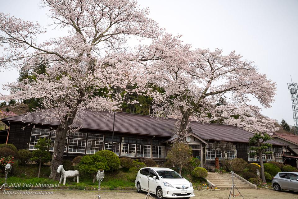 満開の桜の下の旧上岡小学校 その1
