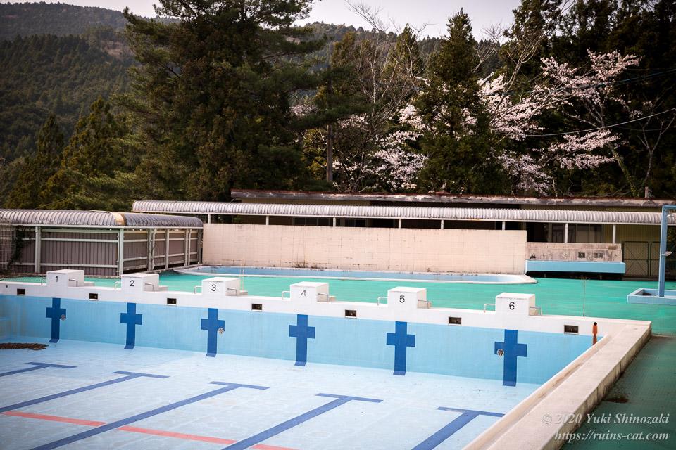 25mプール。奥には浅く小さいプールと、山桜。