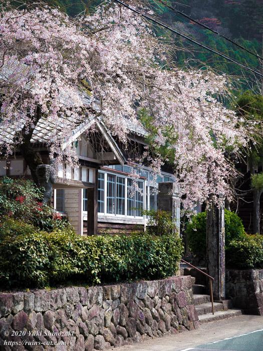 枝垂桜の美しい旧粟代小学校 遠景