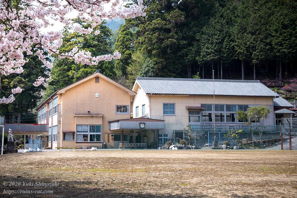 エドヒガンザクラと旧粟代小学校校舎・体育館