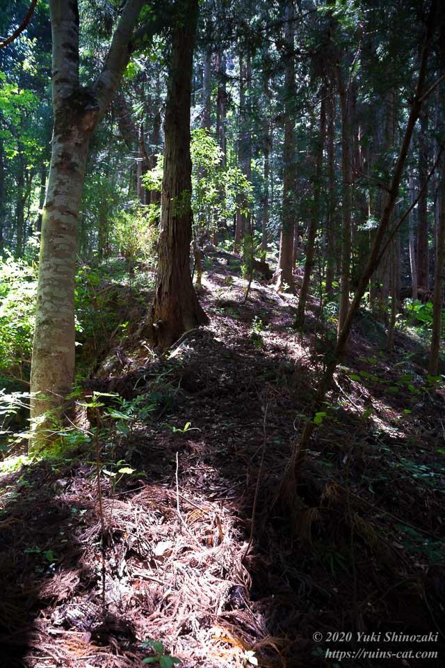 新井さんの家(心霊スポット)の裏手にあった山へと続く坂道