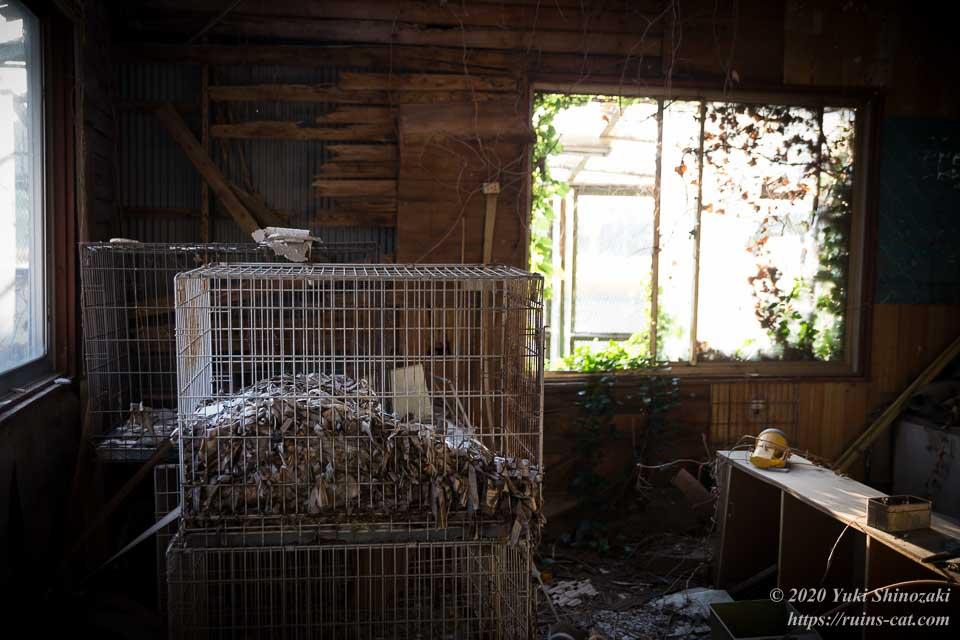 小型犬用のケージが残されているアフリカケンネルの事務所内部
