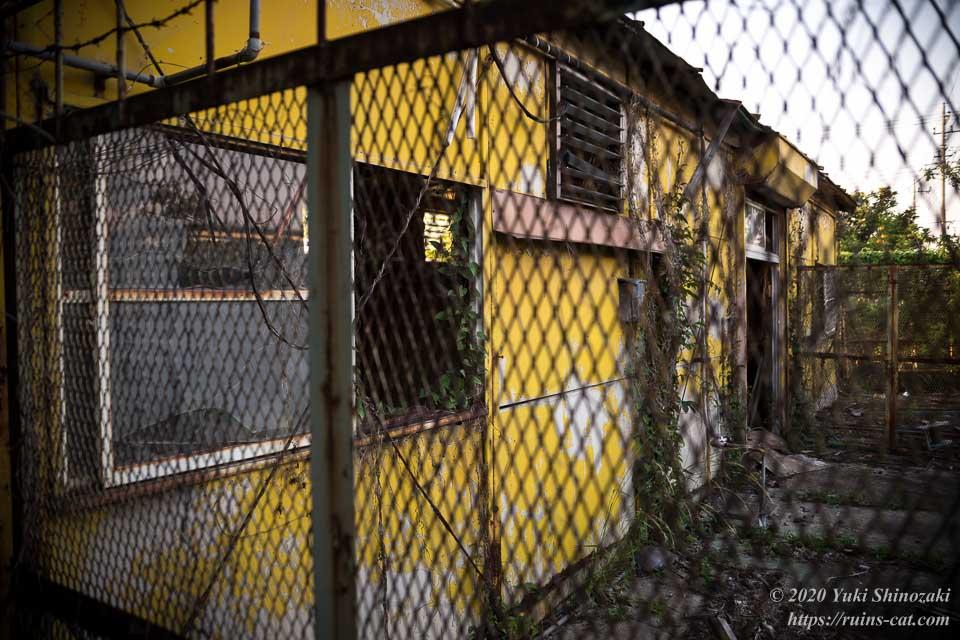 鉄柵越しに見たアフリカケンネルの黄色い畜舎