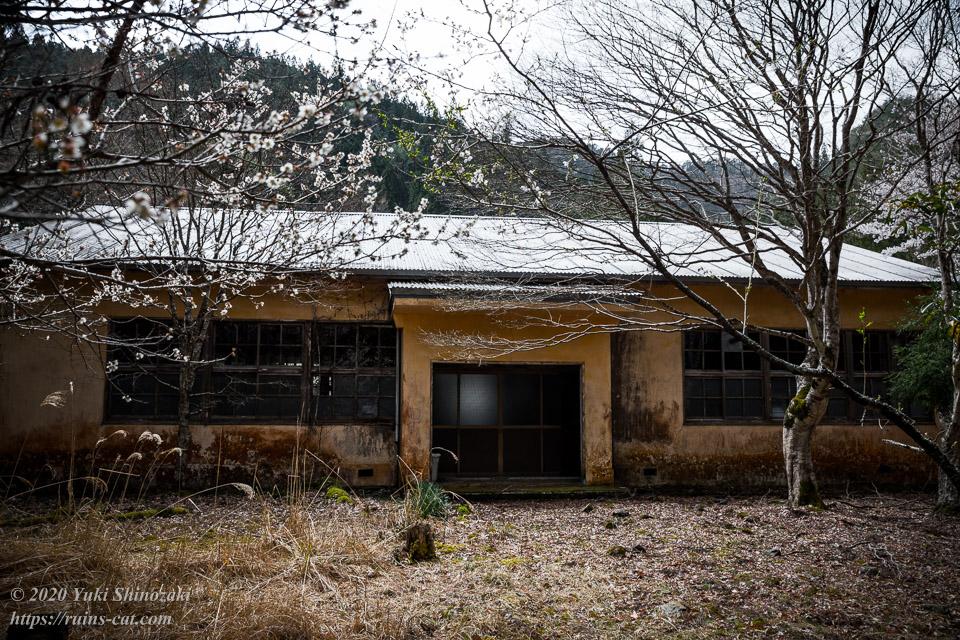 池津川小学校 新校舎 正面。梅を思わせる可憐な白い桜が咲いている。