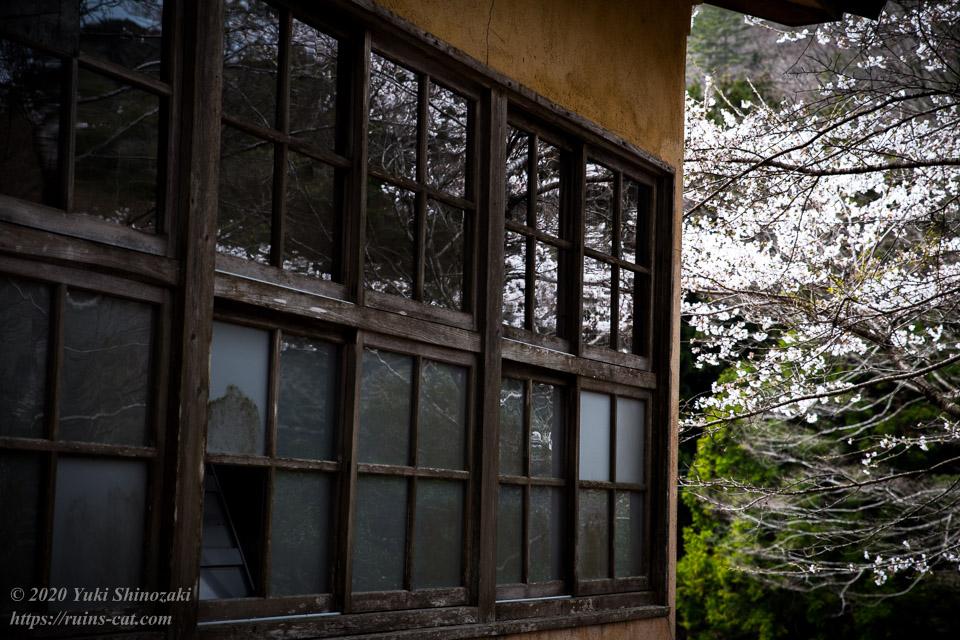 校舎のガラスには川沿いの桜が写り込んでいる。