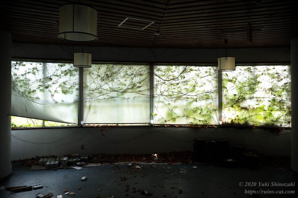 食堂のカーテンに繁茂した蔦