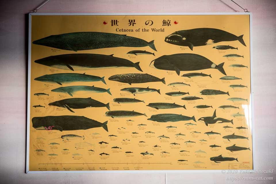 フロント奥の壁に飾られていた「世界の鯨」一覧