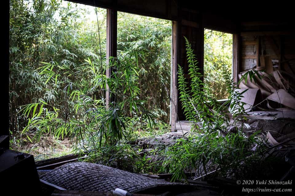 料亭ふるさと(心霊スポット) 1階客室からは草が邪魔して生板池が見えない