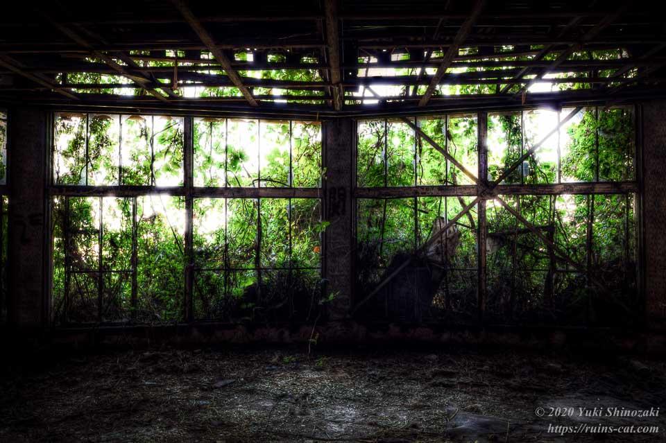 1階円形ホールの窓は草に覆われている