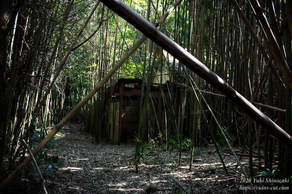 ホテル江戸城の左ルートをさらに奥に進んだところ。竹が道をふさぐように倒れるなど、段々と雲行きが怪しくなってきた。