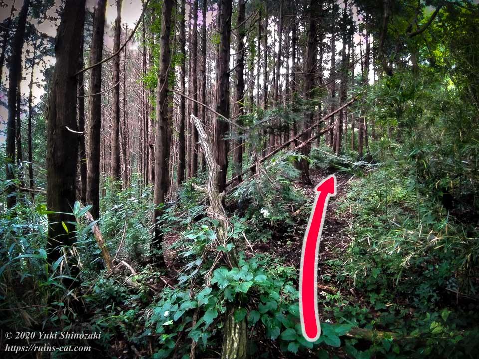 小川脳病院(聖仁会小川病院)への行き方を示した写真 地点5「正しい道」